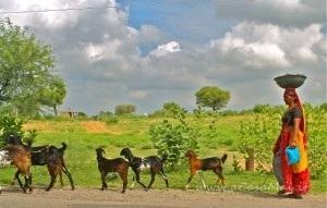 lungo il tragitto da Mandawa a Bikaner