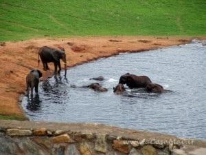Elefanti a fare il bagno