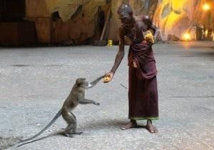 donazione a scimmietta