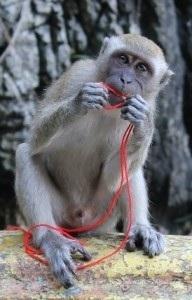 scimmietta a Batu caves