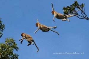 Proboscis_monkey_composite