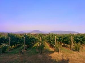 Yarra_Valley