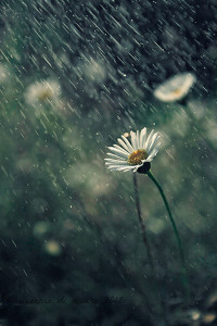 Pioggia - Cammino di Santiago