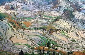 Campi-terrazze di riso, Yunnan, Cina