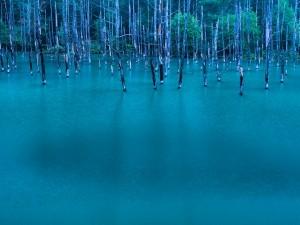 Stagno Blu ad Hokkaido, Giappone