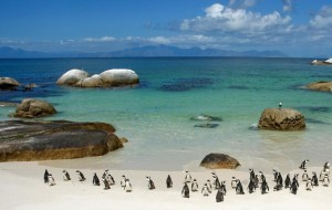 Pinguini a Boulders Beach, Sudafrica