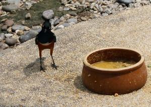 Facce strane al KL Bird Park, Malesia
