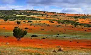 Namaqualand, Sudafrica e Namibia