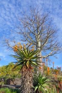 Arid Cactus Zone, Brisbane