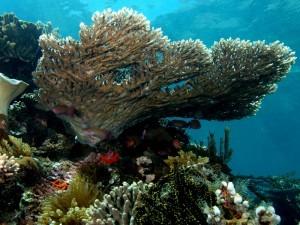 Coralli ad Hikkaduwa National Park, Sri Lanka