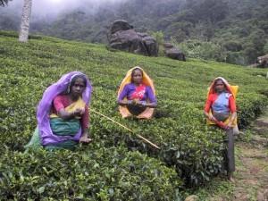 Donne alle piantagioni di tè a Nuwara Eliya, Sri Lanka