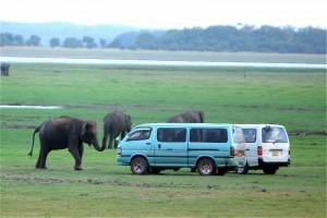 Elefanti al Minneriya National Park 2, Sri Lanka