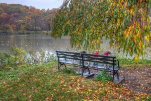 Inwood Hill Park, New York 1