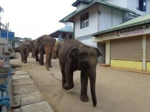Passaggio in paese a Pinnewala Orphanage Village, Sri Lanka