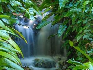 Rainforests, Brisbane