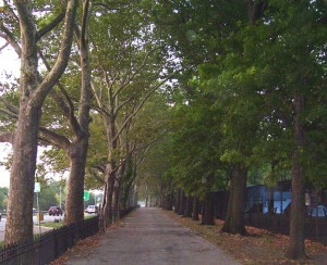 Riverside Park, New York 1
