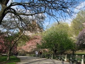Riverside Park, New York 2