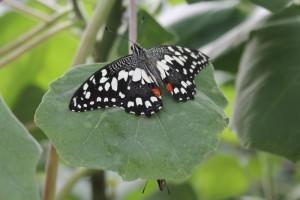 Serra Africa alla Casa delle farfalle di Bordano (1)