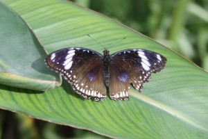 Serra Africa alla Casa delle farfalle di Bordano (2)