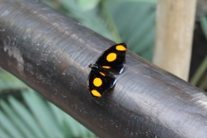 Serra Amazzonia alla Casa delle farfalle di Bordano (1)