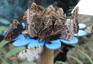 Serra Amazzonia alla Casa delle farfalle di Bordano (2)