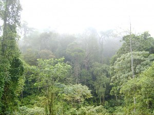 Sinharaja Forest Reserve 2, Sri Lanka