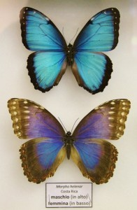 Teche alla Casa delle farfalle di Bordano (3)