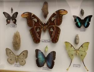 Teche alla Casa delle farfalle di Bordano (4)