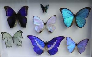 Teche alla Casa delle farfalle di Bordano (5)