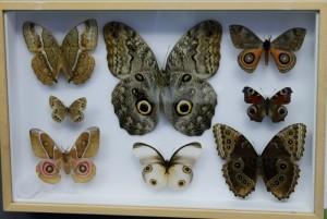 Teche alla Casa delle farfalle di Bordano (6)
