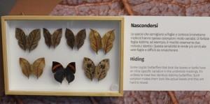Teche alla Casa delle farfalle di Bordano (7)