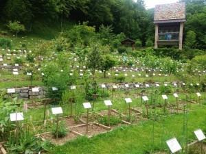 Orto botanico il giardino dei semplici - Zuglio (2)