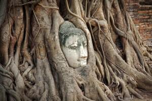 Buddha tra le radici al Wat Phra Mahathat 1, Ayutthaya