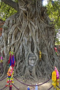 Buddha tra le radici al Wat Phra Mahathat 2, Ayutthaya