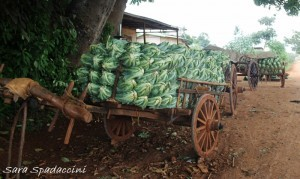 Ortaggi, Myanmar