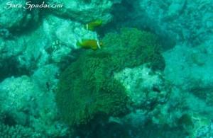 Barriera Corallina 3, Maldive 2013