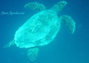 Di fronte ad una stupenda barriera corallina, fine del viaggio alle Maldive