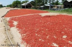 Chili ad essicare per strada, Myanmar