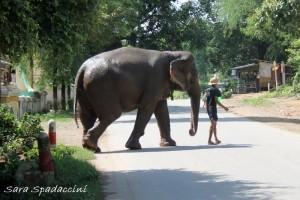 Elefante al lavoro, Myanmar