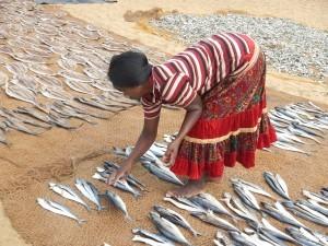 Essiccamento del pesce in Sri Lanka