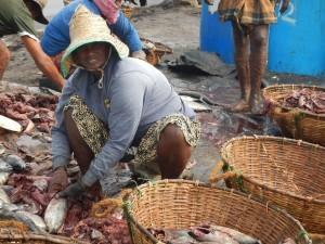 Pulizia del pesce in Sri Lanka