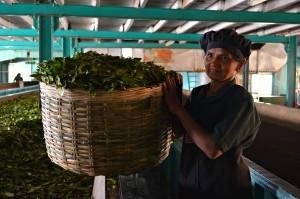 Sri Lanka: tè