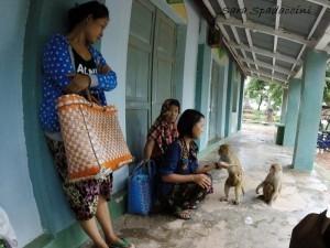 scimmie-a-po-win-taung-2-monywa-birmania