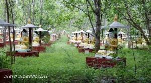 statue-di-buddha-sotto-alberi-bo-monywa-birmania