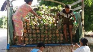 un-po-di-ananas-bagan-myanmar