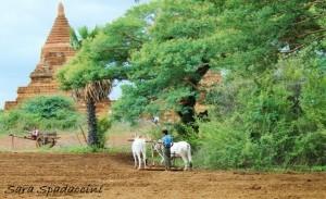 vita-nella-vecchia-bagan-birmania