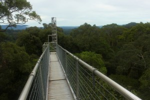 Canopy Walk at Ulu Temburong, Brunei (800x534)