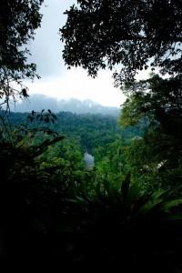 Danum Valley Canopy Walkway, Malesia (534x800)