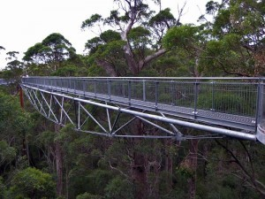 Valley of The Giants Tree Top Walk, Australia